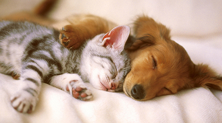 A dog and and a cat sleeping together peacefully