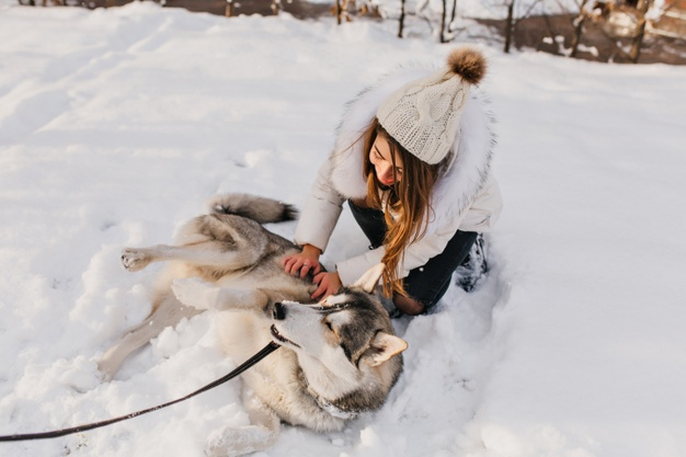 How to Keep Your Pets Comfortable During Winter