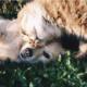 Animal Health care